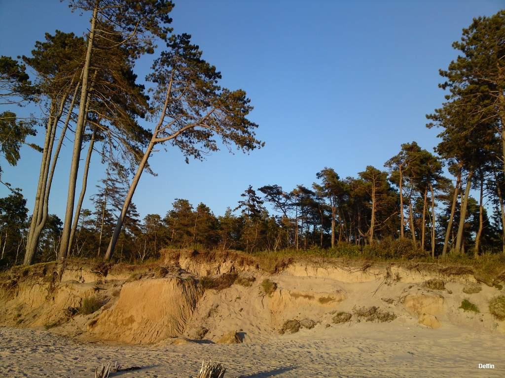 drzewa na kifie przy morzu